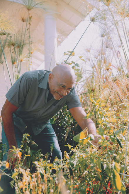 Pedro Noguera picks a pepper from his home plot.